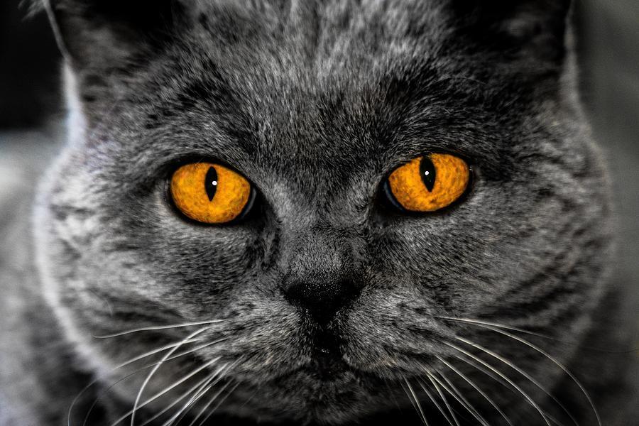 Steel Orange Cat Eyes Photograph By Billy Soden