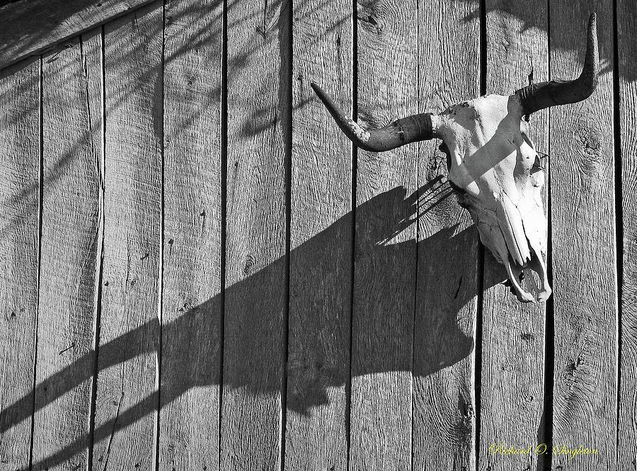 Steer Photograph - Steer Skull On Barn by Richard Singleton