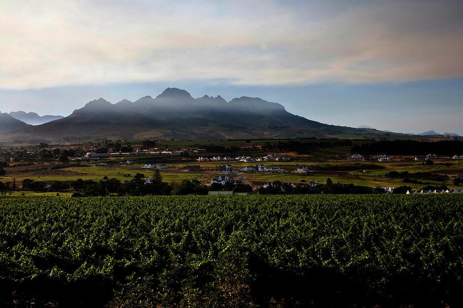 Stellenbosch Photograph - Stellenbosch Vineyard by Dale Halbur