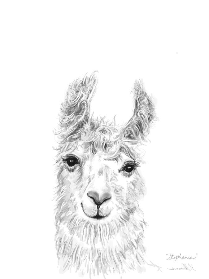 Llamas Drawing - Stephanie by K Llamas