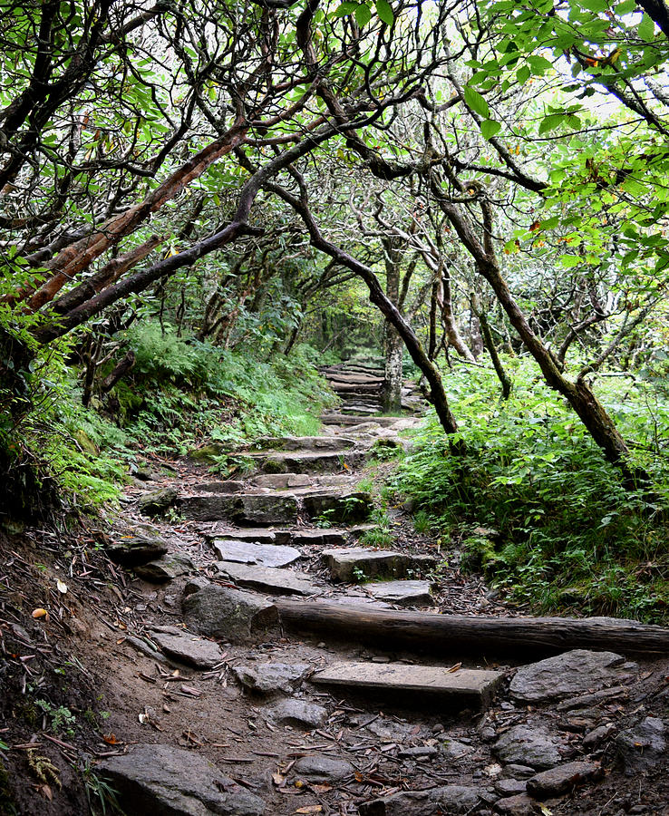 Steps Into The Enchanted Forest Photograph
