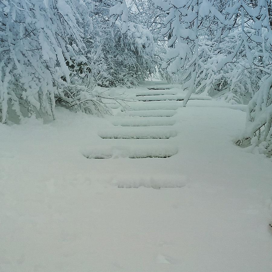 Steps by Nina-Rosa Duddy