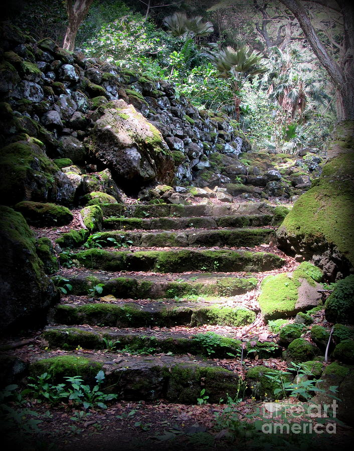 Oahu Photograph - Steps to a Sacred Place by Joy Patzner