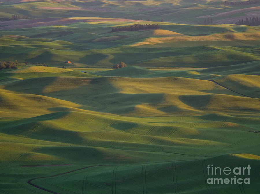 Barns Photograph - Steptoe Butte 13 by Tracy Knauer