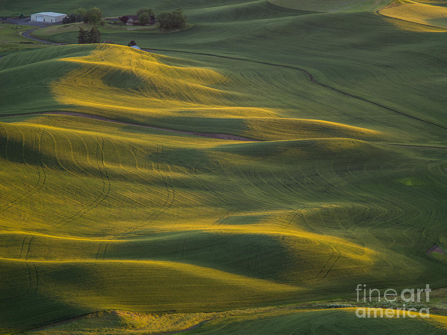 Barns Photograph - Steptoe Butte 14 by Tracy Knauer
