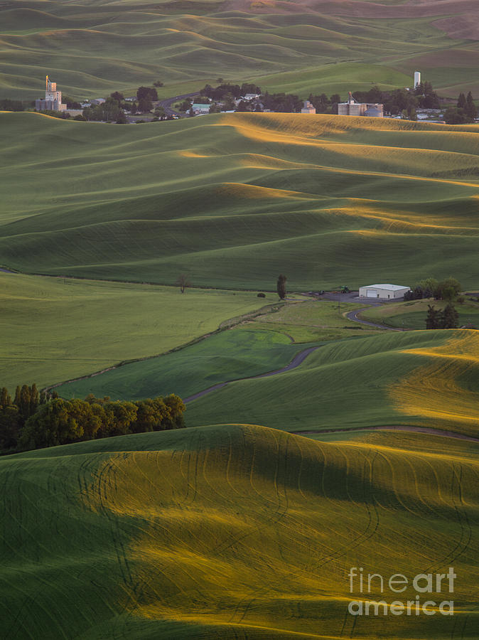 Barns Photograph - Steptoe Butte 16a by Tracy Knauer