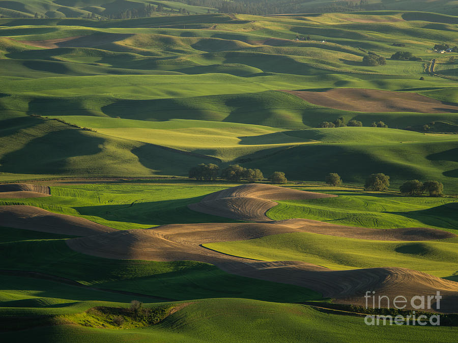 Barns Photograph - Steptoe Butte 4 by Tracy Knauer