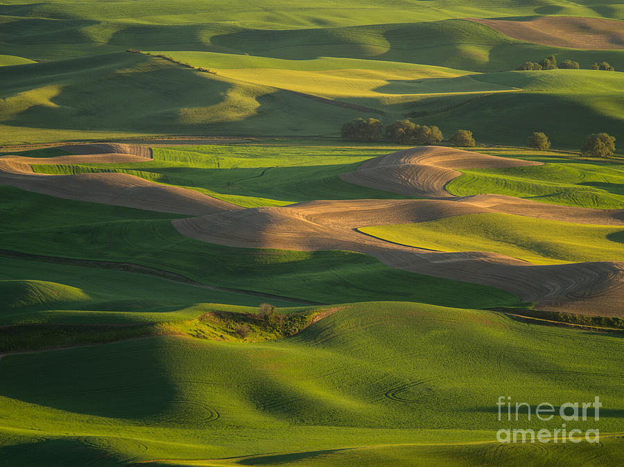 Barns Photograph - Steptoe Butte by Tracy Knauer