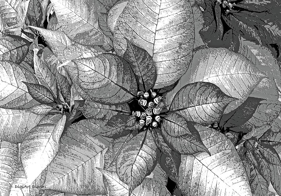 Poinsettia Digital Art - Sterling Shimmer by DigiArt Diaries by Vicky B Fuller