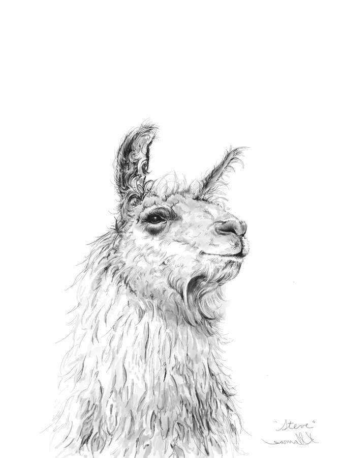 Llamas Drawing - Steve by K Llamas