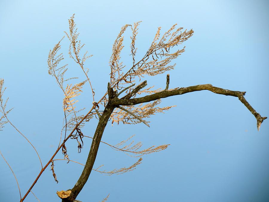 Blue Sky Photograph - Sticks by Azthet Photography