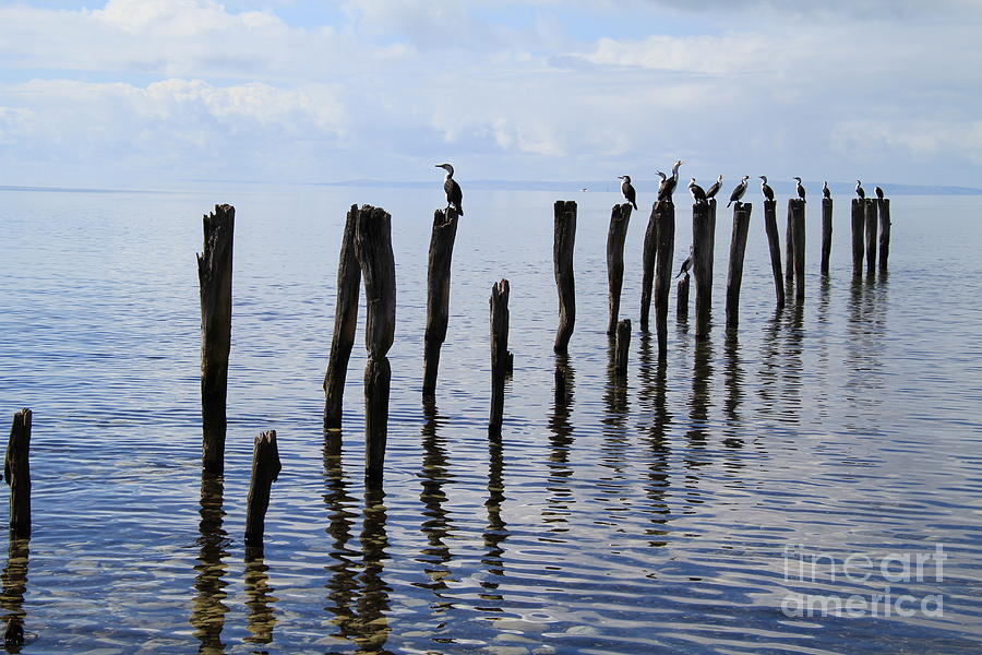 Sticks out to Sea by Stephen Mitchell