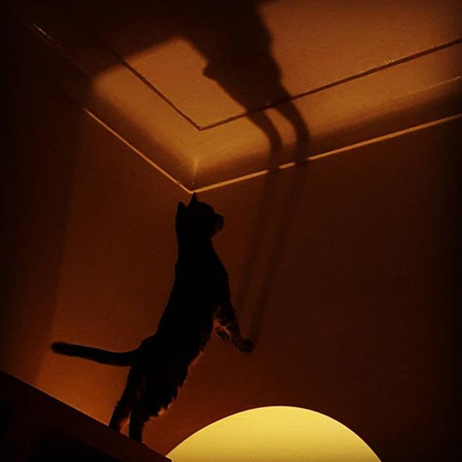 Stiles Photograph - #stiles Attacking His Own Shadow by Dante Harker