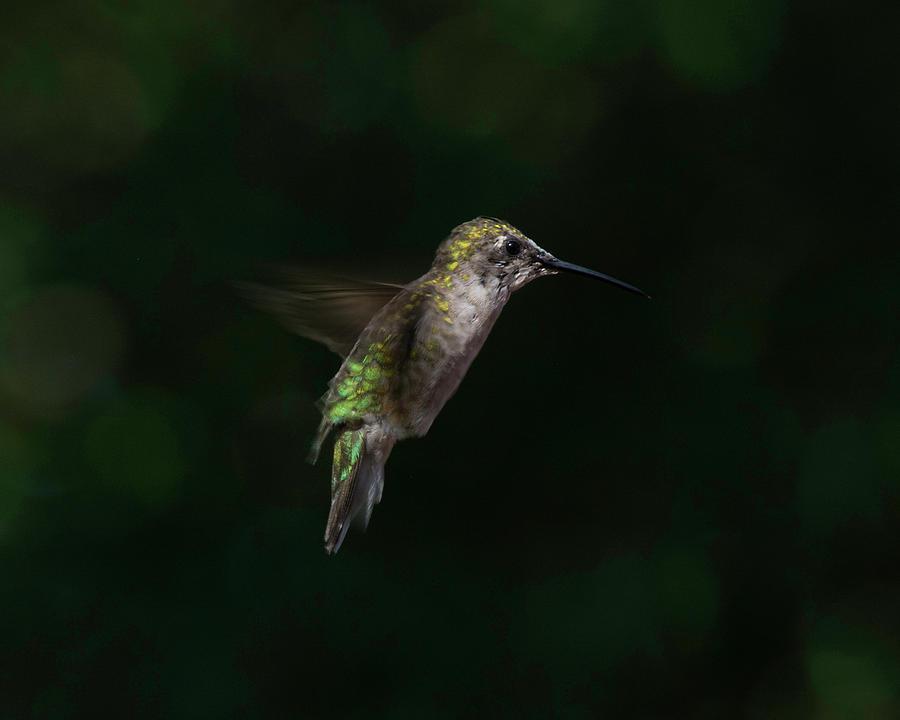 Still flight by Kenneth Cole