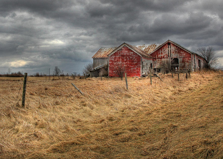Red Barn Photograph - Still For Sale by Lori Deiter