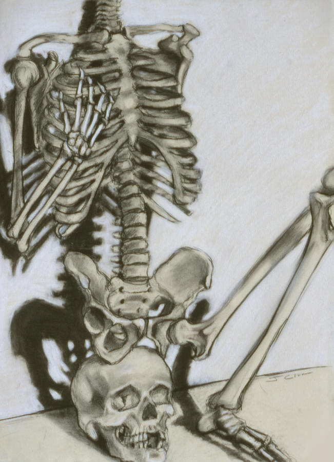 Skeleton Drawing - Still Life by John Clum