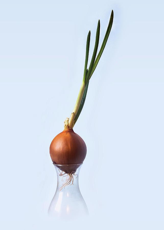 Onion Photograph - Still Life - Onion by John Christopher