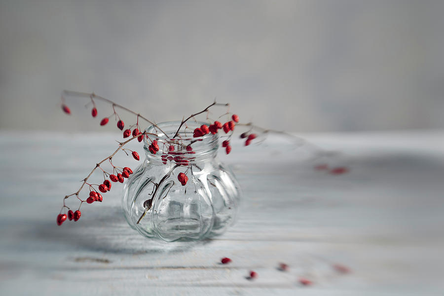 Still Life Photograph - Still Life With Red Berries by Nailia Schwarz