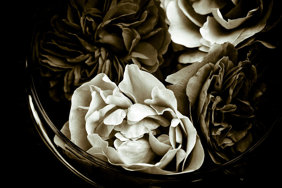 Roses Photograph - Still Life With Roses by Frank Tschakert