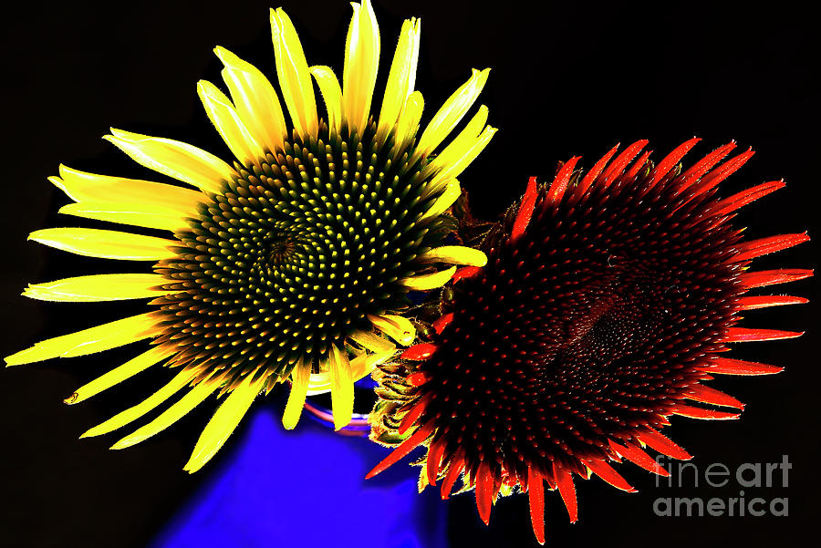 Summer Flowers Photograph - Still Life With Summer Flowers #1. by Alexander Vinogradov