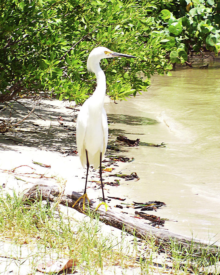 Florida Photograph - Still Looking For Lunch Gp by Chris Andruskiewicz