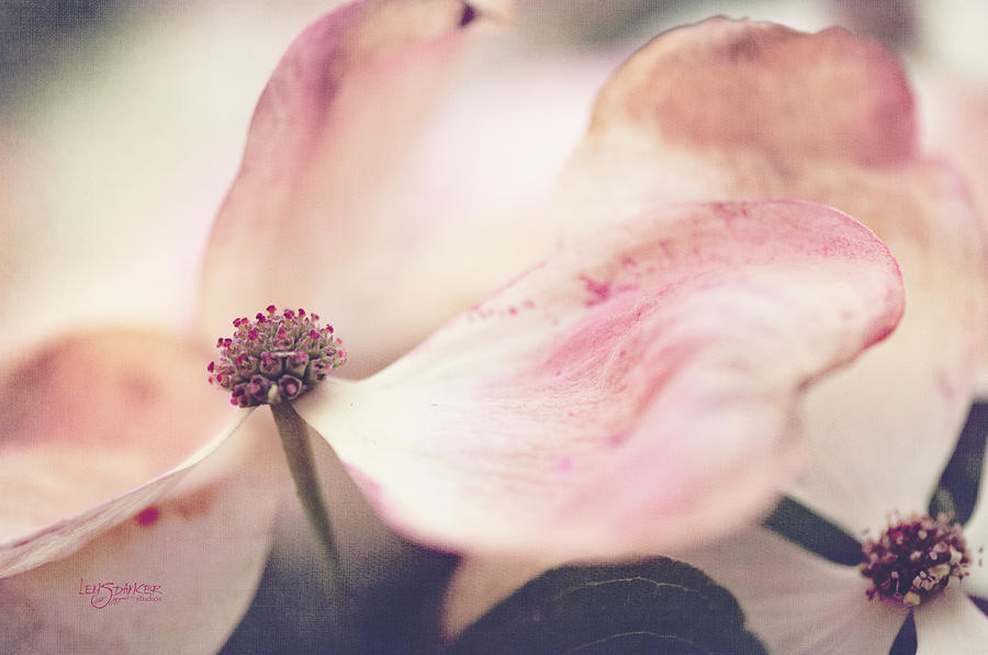 Flowers Photograph - Still Motion by Joy Gerow