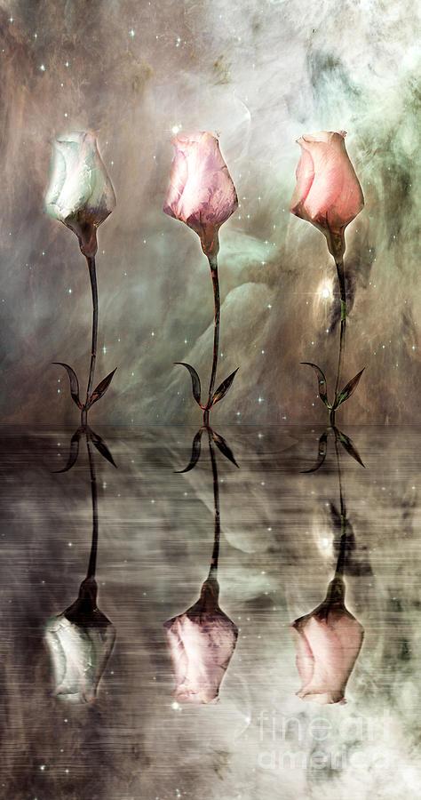 Floral Photograph - Still by Jacky Gerritsen