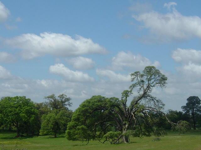 Tree Photograph - Still Standing Strong by JoAnn Tavani