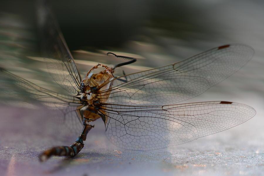 Macro Photograph - Still wings by Paulina Roybal