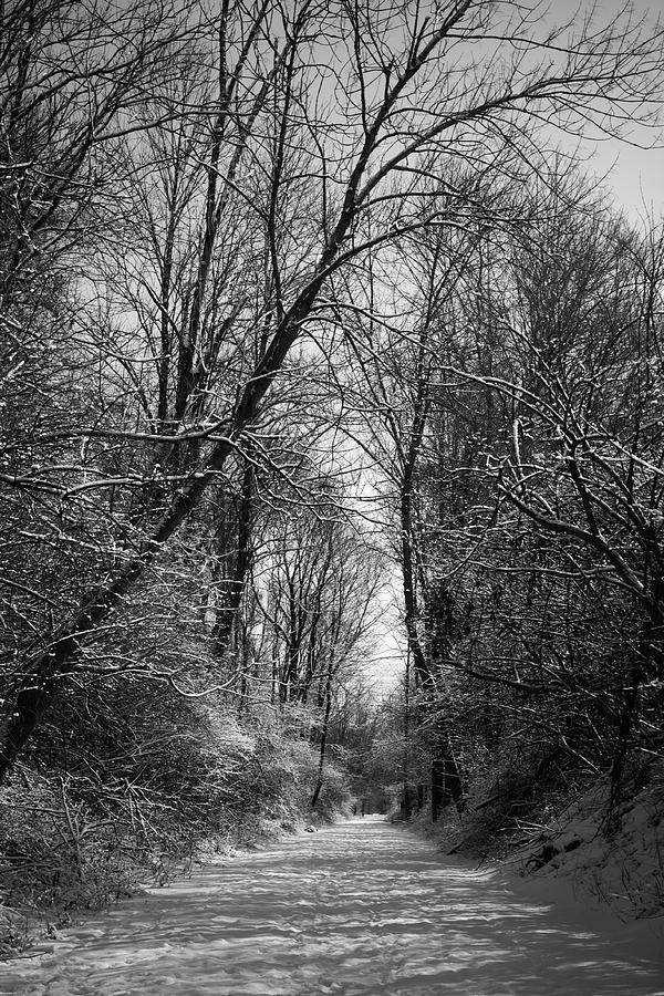 Winter Photograph - Stillness by Kevin Brett