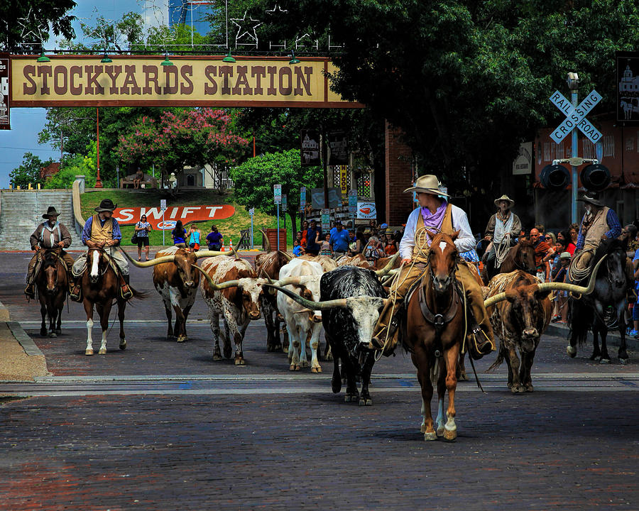 American Photograph - Stockyards Cattle Drive by David and Carol Kelly
