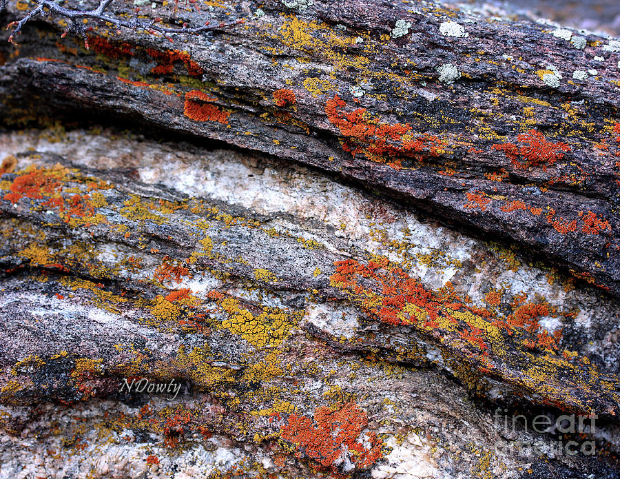 Stone and Lichen by Natalie Dowty