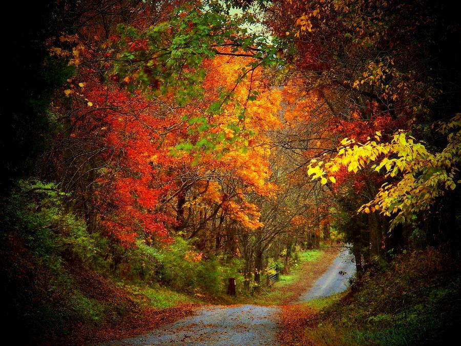 Autumn Photograph - Stone Bridge Road by Joyce Kimble Smith
