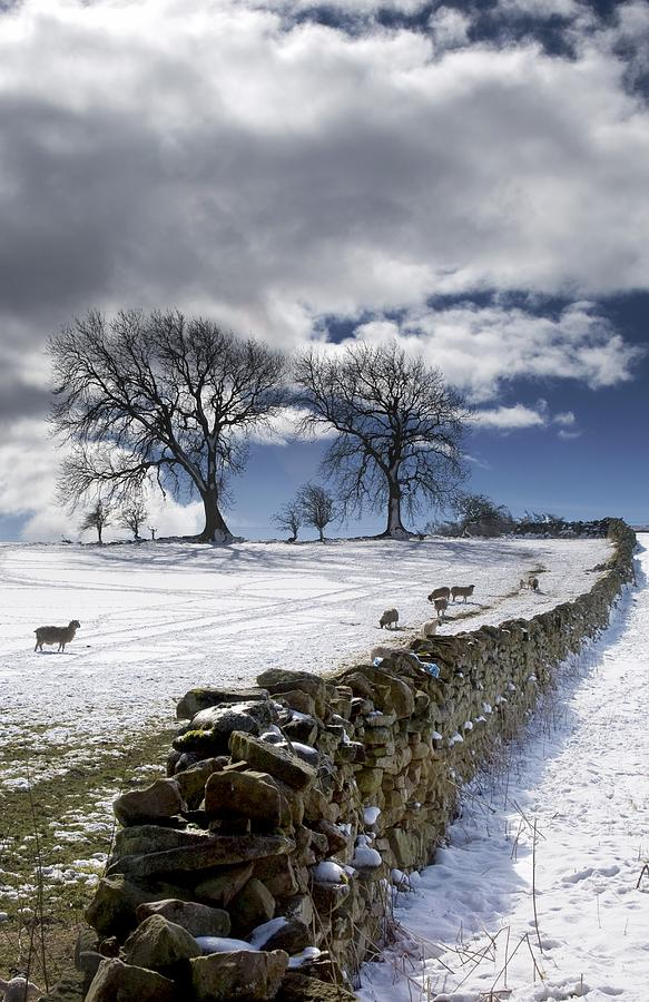 Cloud Photograph - Stone Fence, Weardale, County Durham by John Short