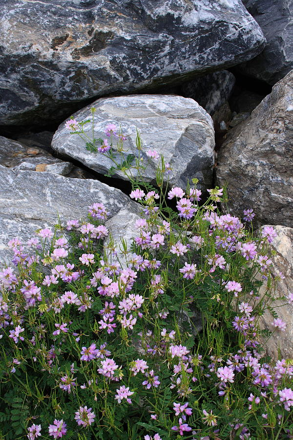 Landscape Photograph - Stone Flowers Pink by Doug Mills