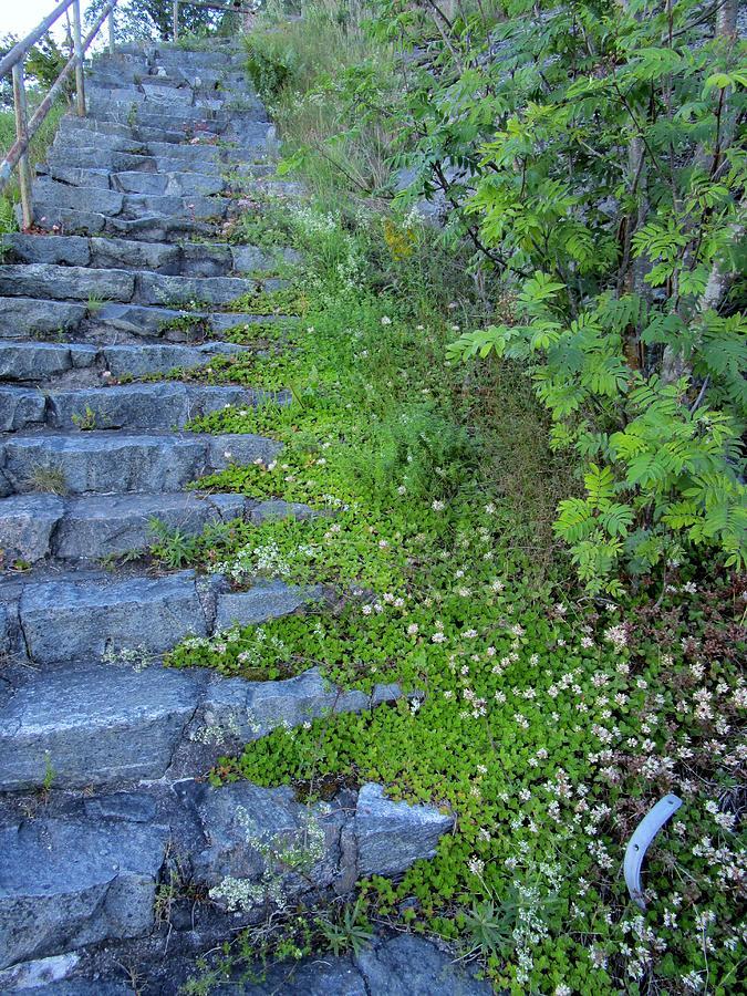 Blue Photograph - Stone Steps by Rosita Larsson