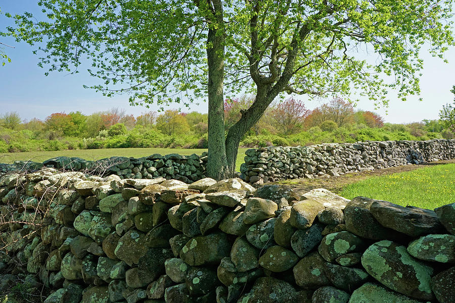 Stone Wall in Rhode Island by NANCY DE FLON