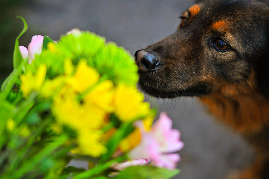 Dog Photograph - Stop And Smell The Flowers by Mandy Wiltse