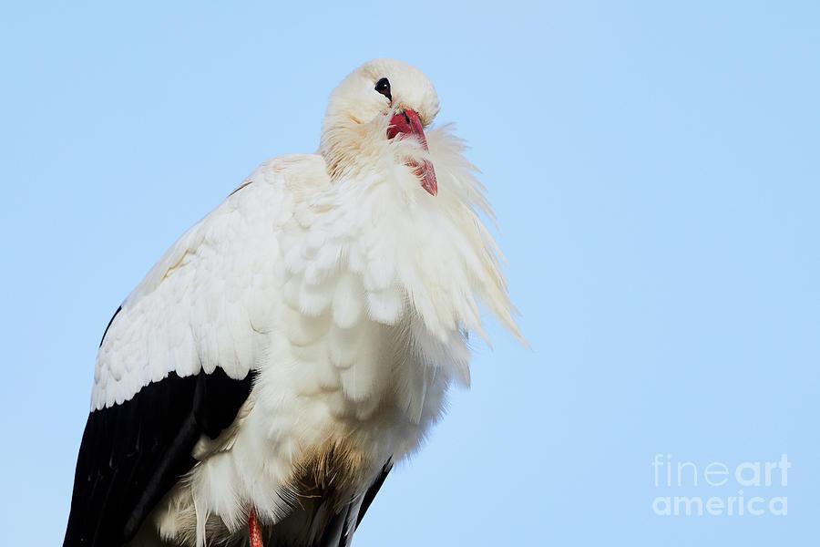 Storck Closeup Photograph