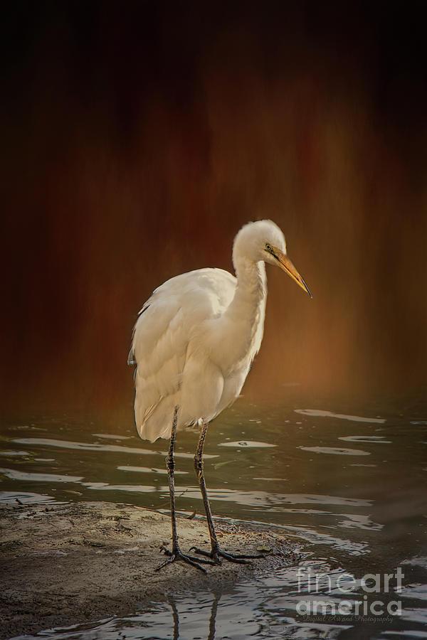 Stork on a Rock by Elaine Teague