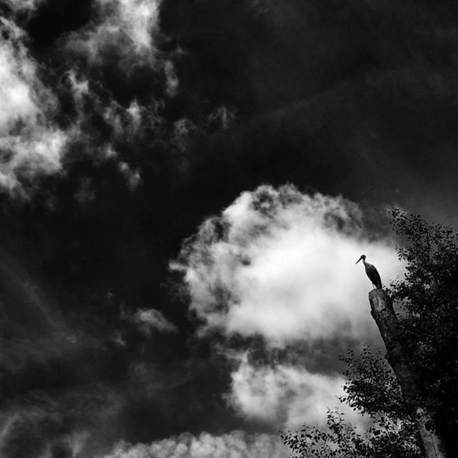 Blackandwhite Photograph - Stork #stork #bird #tree #animals #sky by Rafa Rivas