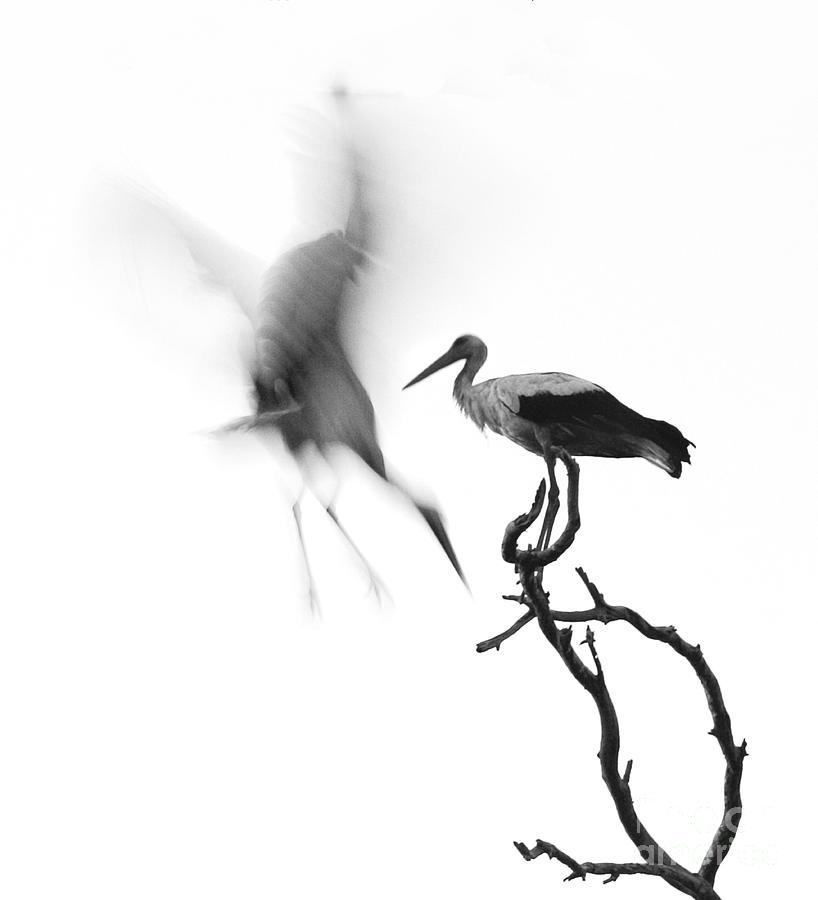 Stork Photograph - Storks by Nahum Budin
