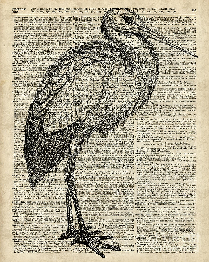 Storkwild Bird Vintage Ink Illustration Over Old Book Page Digital