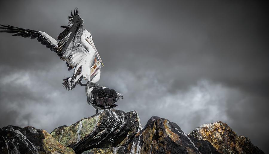 Storm Birds Photograph