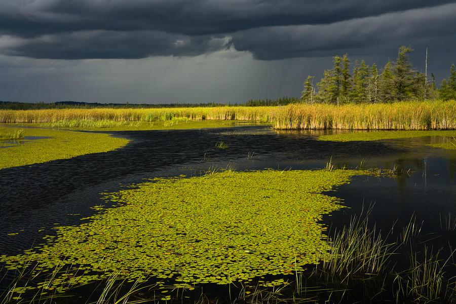 Lake Photograph - Storm Light At Patten Lake #2 by Irwin Barrett