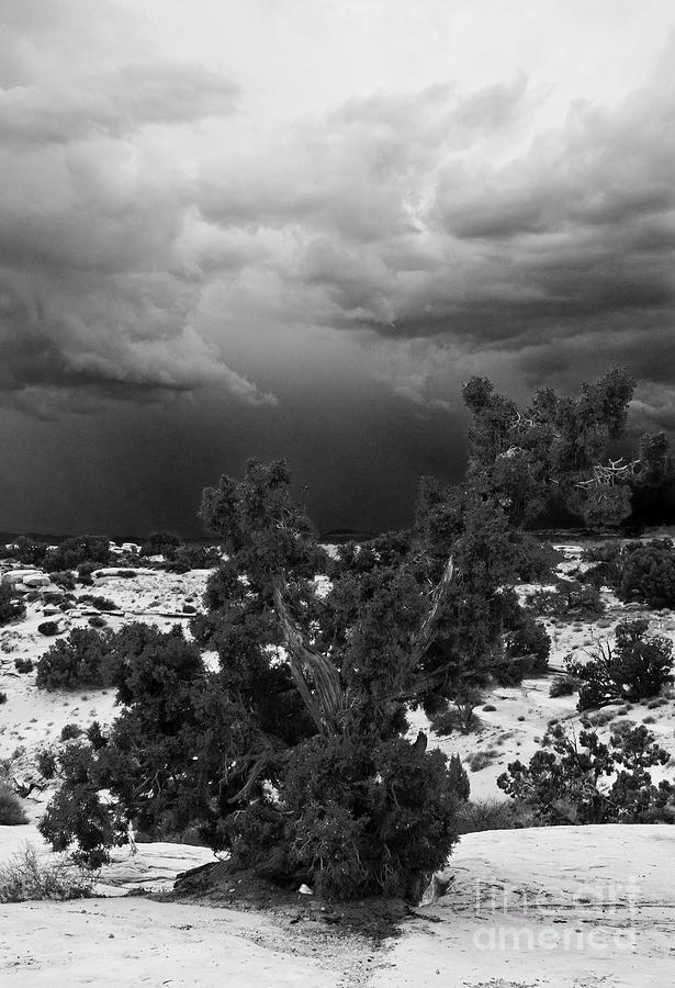 B&w Photograph - Storm Over Sand Bench Utah by John Hermann
