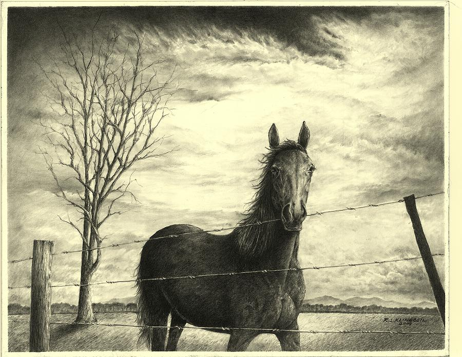 Horse Drawing - Storm by Richard Klingbeil