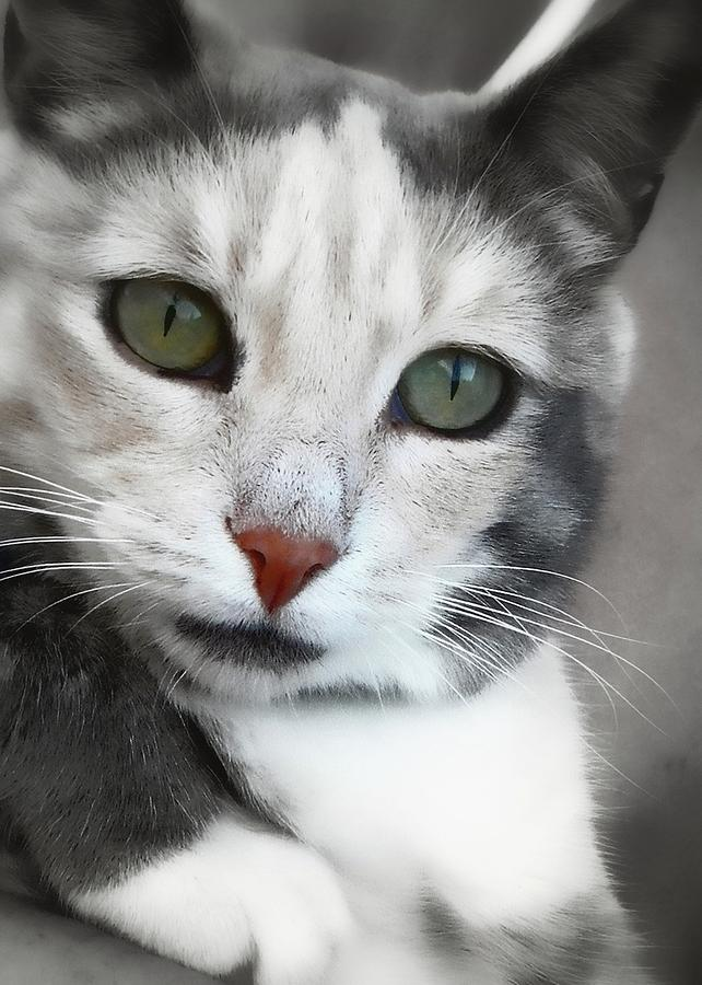 Cat Photograph - Stormy by JAMART Photography
