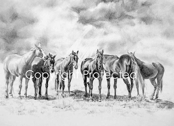 Horses Drawing - Stormy Skies by Barbara Widmann