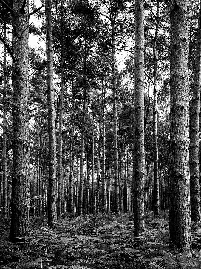 Trees Photograph - Straight Up by Nick Bywater